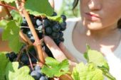 Verso l'8 marzo  Puglia seconda in Italia per imprese agricole al femminile