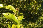 Gelate, Carrabba (Cia Puglia): Un disastro, un colpo al cuore, intervenire subito