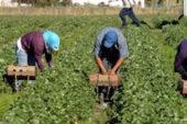 L'agricoltura in Puglia non va criminalizzata